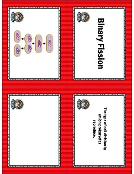 Cell Growth Card Sort