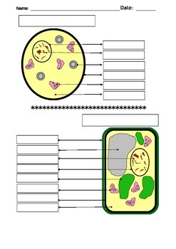 Cell Label, Diagram