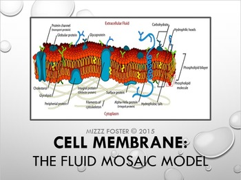 Cell Membrane: Fluid Mosaic Model Power Point