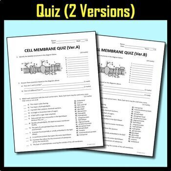 Cell Membrane BUNDLE {Editable and Options for Differentiation}