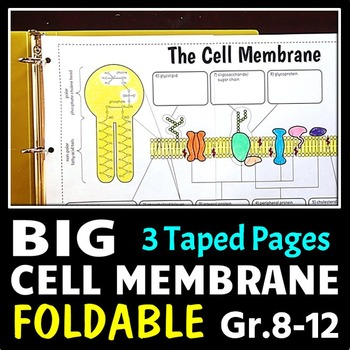 Cell Membrane - Big Foldable for Interactive Notebook or Binder