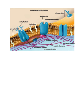 Cell Membrane Board Notes and Assignment