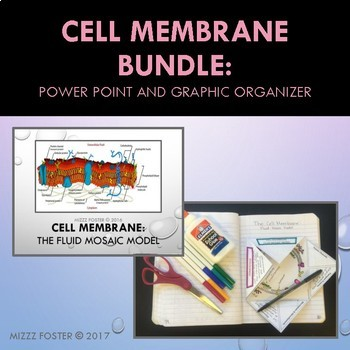 Cell Membrane Bundle: Power Point and Graphic Organizer Foldable