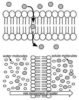 Cell Membrane Caption Images