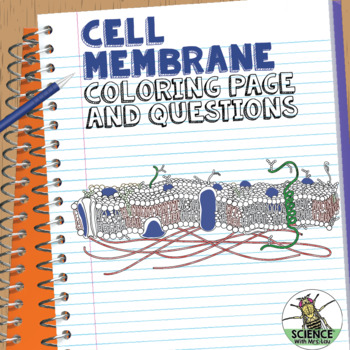 Cell Membrane Coloring Activity: Help Students Identify Key ...
