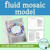 Cell Membrane Fluid Mosaic Model- Phospholipid bilayer