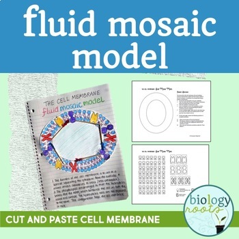 Cell Membrane Fluid Mosaic Model- Phospholipid bilayer