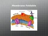Cell Membrane Foldable