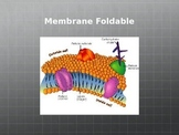 Cell Membrane Foldable