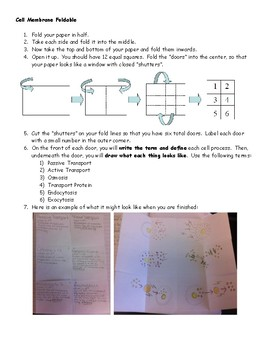Cell Membrane Foldable Interactive Notebook