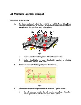 Cell Membrane Funtion - Transport (Outline / Review / Handout)
