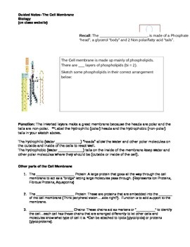 Cell Membrane Guided notes to accompany Powerpoint