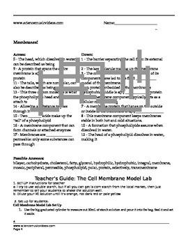 Cell Membrane Model Lab
