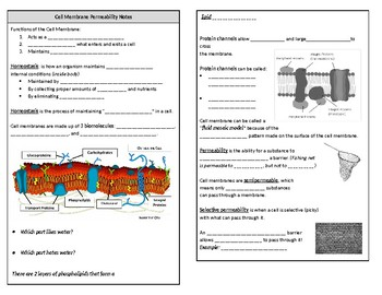 Cell Membrane Permeability Guided Notes