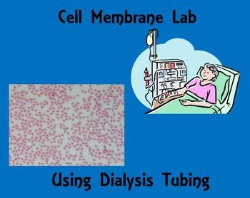 Cell Membrane Permeability Lab