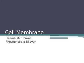 Cell Membrane (Phospholipid Bilayer) Structure Presentation