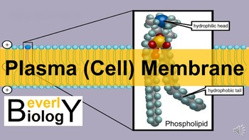 Cell Membrane / Plasma Membrane PowerPoint (student handout included)
