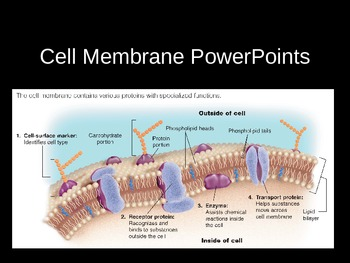 Cell Membrane PowerPoints, Presenations, Lectures