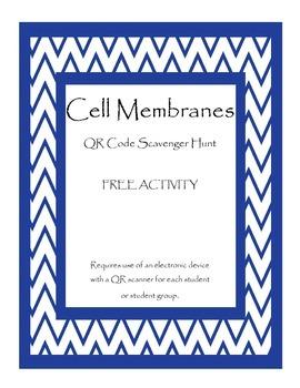 Cell Membrane QR Code Scavenger Hunt