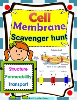 Cell Membrane Scavenger Hunt