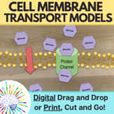 Cell Membrane Transport Activity, Hands On Cell Membrane M