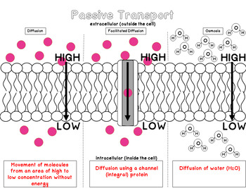Cell Membrane Transport Manipulatives: Active and Passive Cell Transport