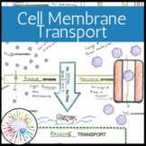 Cell Membrane Transport and Homeostasis Doodle Notes