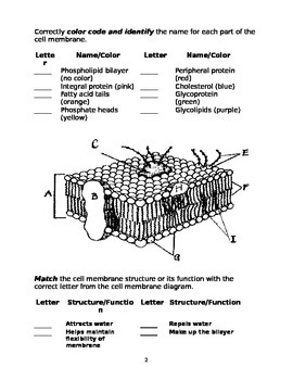 Cell Membrane Worksheet by Marta Dabrowska | Teachers Pay ...