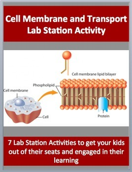 Cell Membrane and Transport - 7 Engaging Lab Station Activities