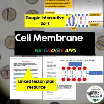 Cell Membranes:  Cells for Middle School Lesson 3