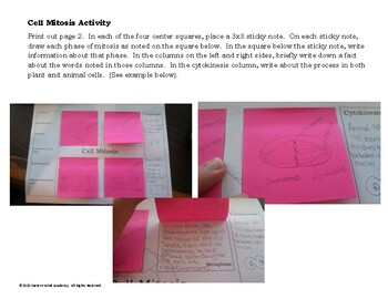Cell Mitosis Activity
