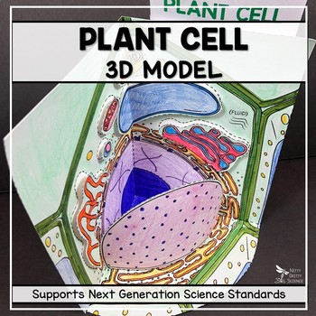Cell Model  - Plant Cell 3D