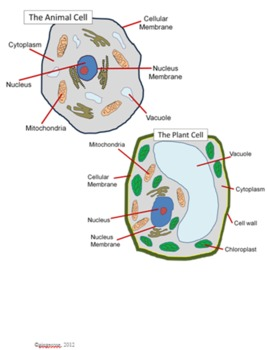 Cell model project guide and rubric by gingerose tpt cell model project guide and rubric ccuart Choice Image