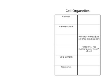 Cell Organelle Activity