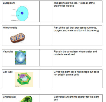 Cell Organelle Bundle - Cut and Paste, PowerPoints, Review, Flipbook, etc.