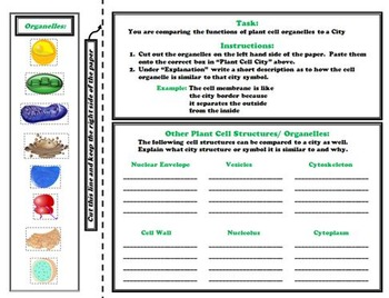 Plant and Animal Cell Organelles and Function Activity
