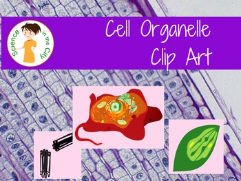 Cell Organelle Clip Art