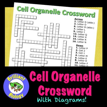 Cell Organelle Diagram Crossword