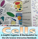 Cells: Graphic Organizer and Manipulative for Interactive