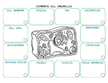 Cell Organelle Function Cards