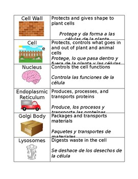 Cell Organelle Matching Teaching Resources Teachers Pay Teachers
