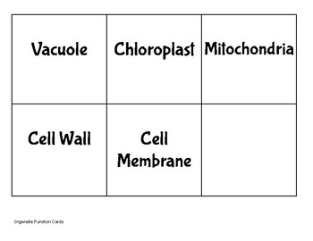 Cell Organelle Matching Activity