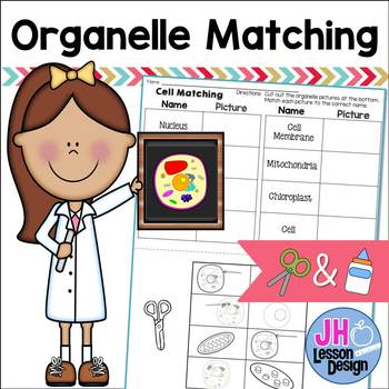 Cell Organelle Matching: Cut and Paste