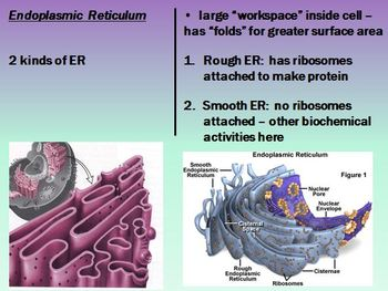 Cell Organelle Notes Powerpoint Presentation