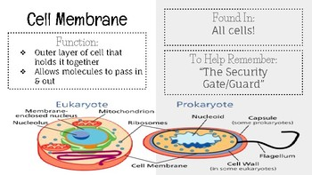 Cell Organelle Presentation- Google Slides