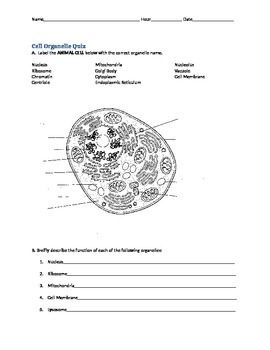Organelles diagram quiz circuit connection diagram cell organelle quiz by bargardi s biology teachers pay teachers rh teacherspayteachers com plant cell quiz ccuart Image collections