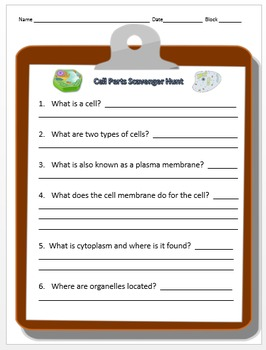 Cell Organelle Scavenger Hunt (basic)