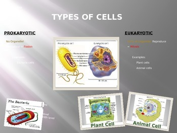 Cell Organelle Structure and Function PowerPoint