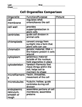 Cell Organelle Vocabulary