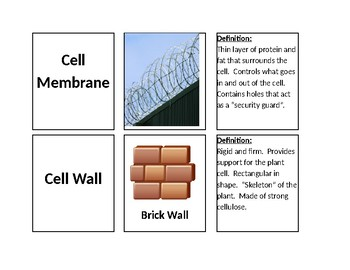 Cell Organelle Vocabulary Cards